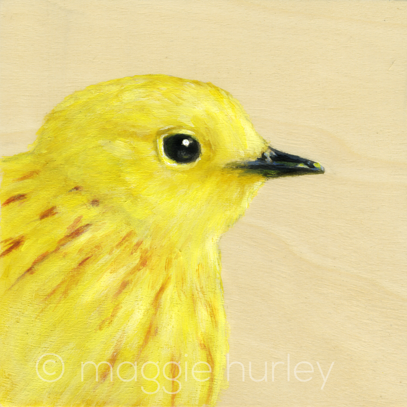 Portrait of a Yellow Warbler