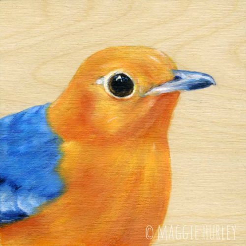 orange headed thrush bird art by Maggie Hurley