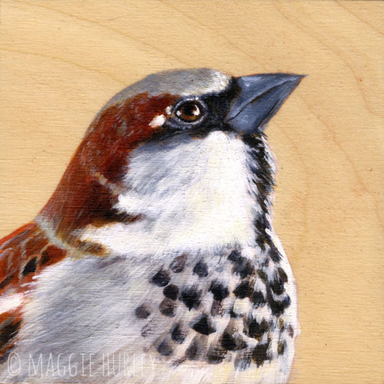 Print of a house sparrow painting by Maggie Hurley