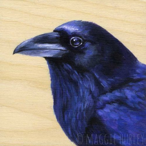 Raven art by Maggie Hurley