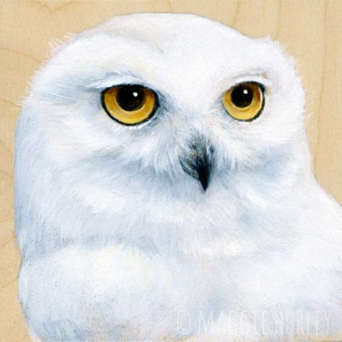 Snowy Owl Bird Art by Maggie Hurley