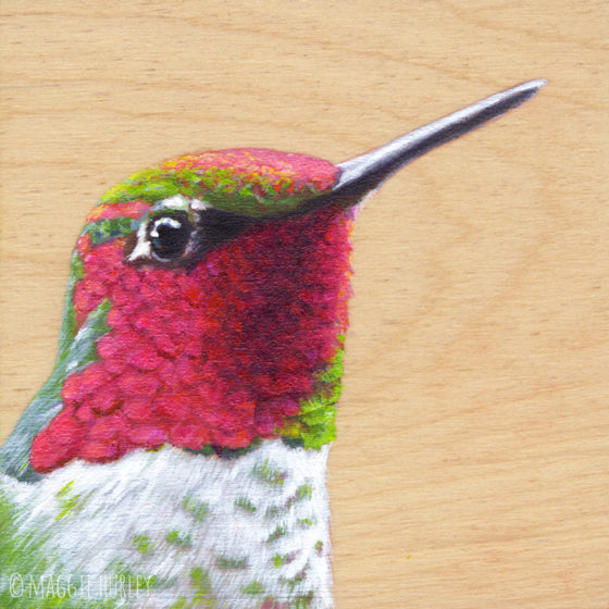 anna's hummingbird art by maggie hurley