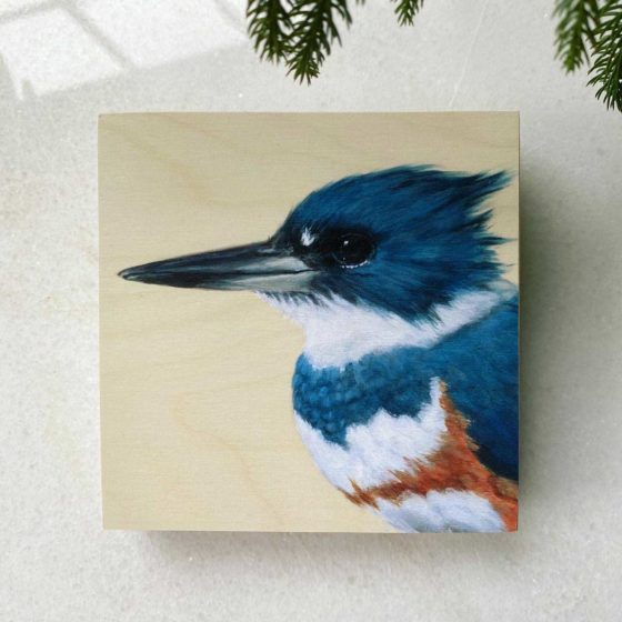portrait of female belted kingfisher on wood