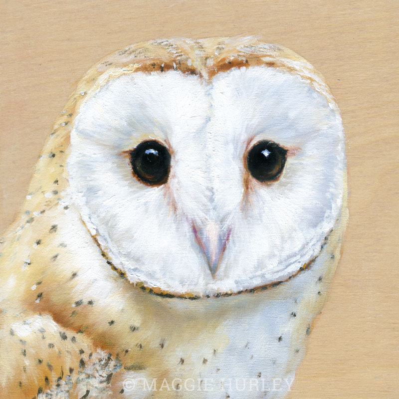 Barn Owl painting by Maggie Hurley