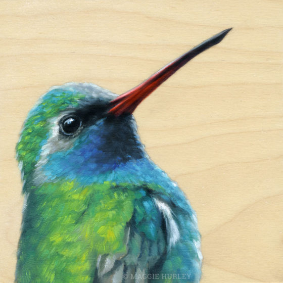 Broad-billed hummingbird painting by maggie hurley