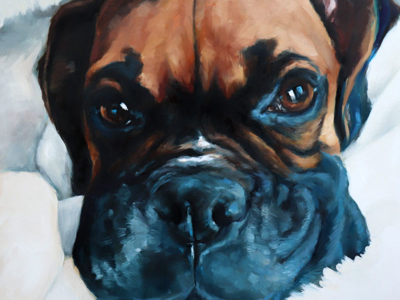 Dog Pet Portrait – Shiloh the Boxer