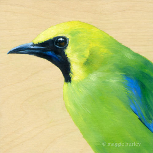 blu-winged leafbird