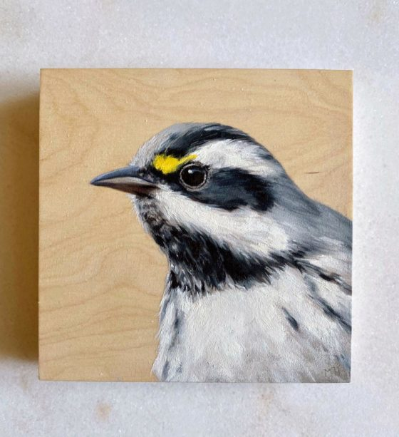 Black throated Gray Warbler oil painting