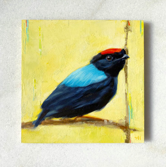Bird art painting blue backed manakin