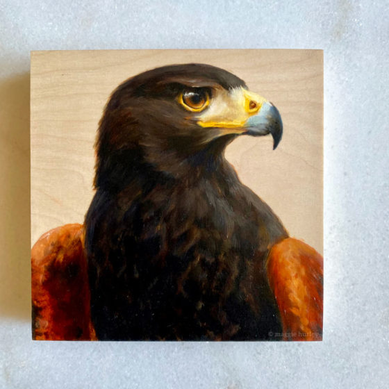 Oil painting of a Harris's Hawk