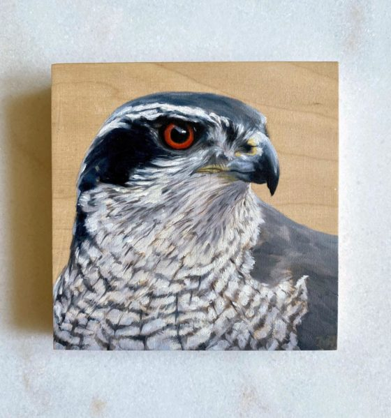 oil painting northern goshawk