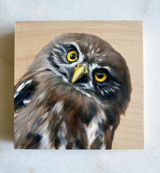 Pygmy Owl Oil Painting