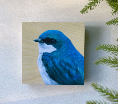 front view of tree swallow bird art