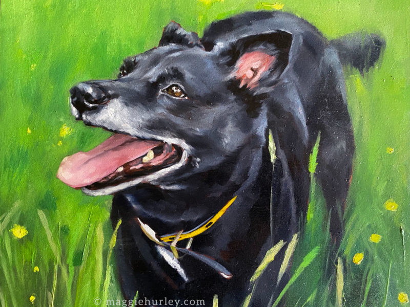 Dog Portrait Painting – Ace