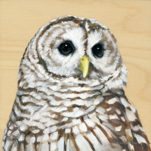 Barred Owl bird painting by maggie hurley