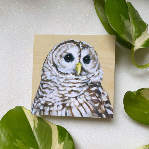 Barred Owl bird art by maggie hurley