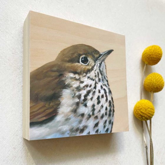 Hermit thrush bird art
